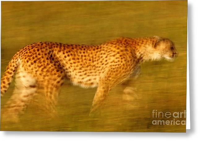 Cheetah Photographs Greeting Cards - Cheetah, Masai Mara, Kenya Greeting Card by Art Wolfe