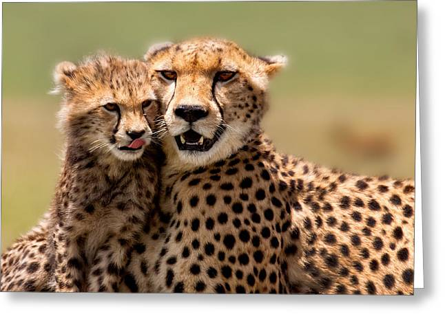 Wilderness Pyrography Greeting Cards - Cheetah mother and cub in Masai Mara Greeting Card by Maggy Meyer