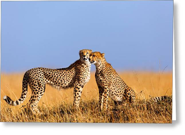 Cheetah Mother With Daughter Masai Mara Greeting Card by Maggy Meyer