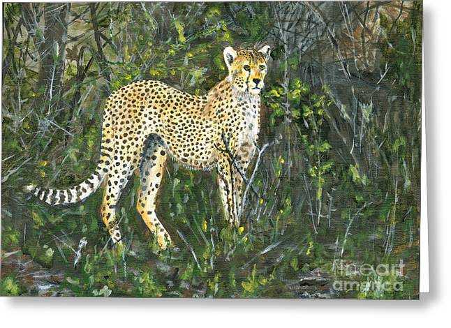 Bedroom Art Greeting Cards - Cheetah Painting Greeting Card by Timothy Hacker