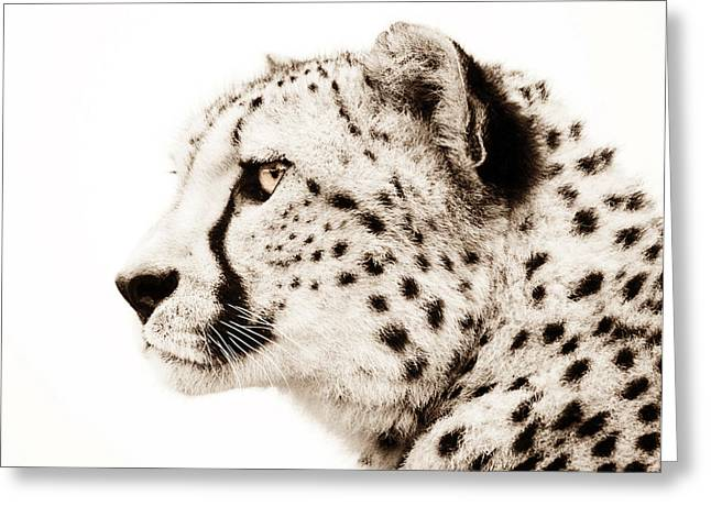 Photodream Greeting Cards - Cheetah Greeting Card by Photodream Art