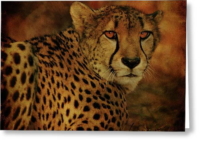 Sandy Keeton Greeting Cards - Cheetah Greeting Card by Sandy Keeton
