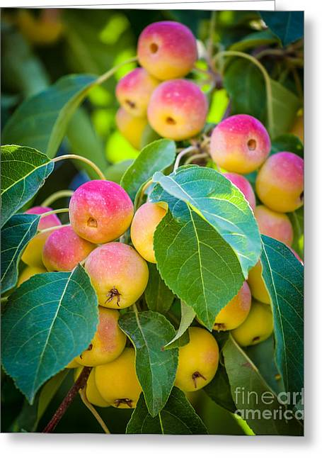 Winemaking Photographs Greeting Cards - Chelan Apples Greeting Card by Inge Johnsson