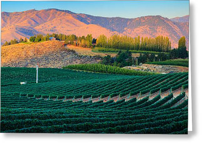 Green Hills Greeting Cards - Chelan Vineyard Panorama Greeting Card by Inge Johnsson