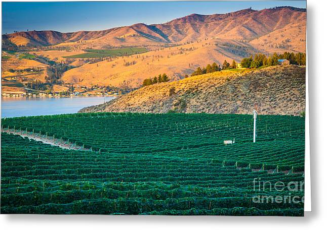 Winemaking Photographs Greeting Cards - Chelan Vineyard Sunset Greeting Card by Inge Johnsson