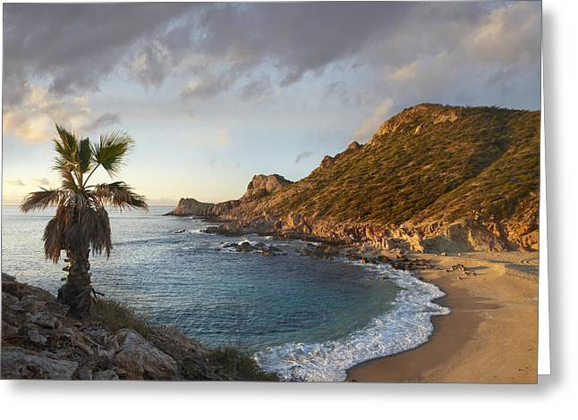 Tim Fitzharris Greeting Cards - Chelino Bay in Mexico Greeting Card by Tim Fitzharris