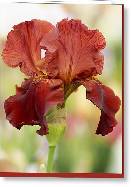 Red Art Greeting Cards - Chelsea Iris Greeting Card by Rona Black