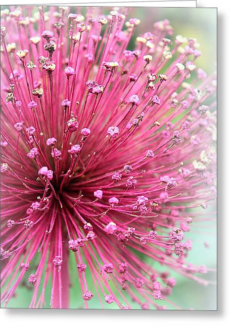 Special Moment Greeting Cards - Cherish Greeting Card by  The Art Of Marilyn Ridoutt-Greene
