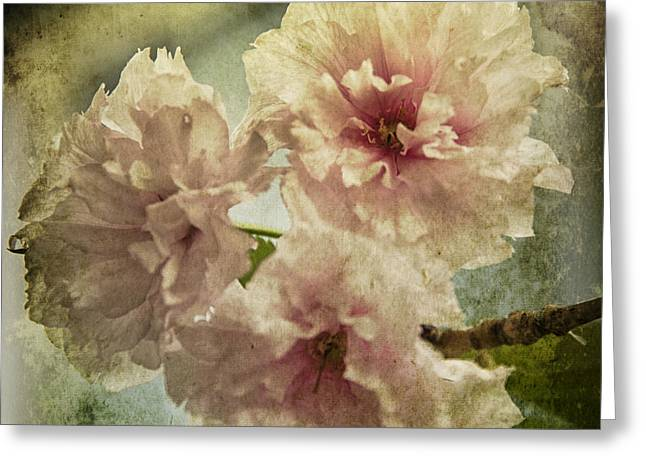 Live In Innocence Greeting Cards - Cherries Jubilee Greeting Card by Terry Rowe