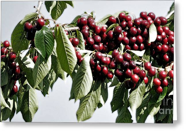 Sour Greeting Cards - Cherries On Top Greeting Card by Gwyn Newcombe
