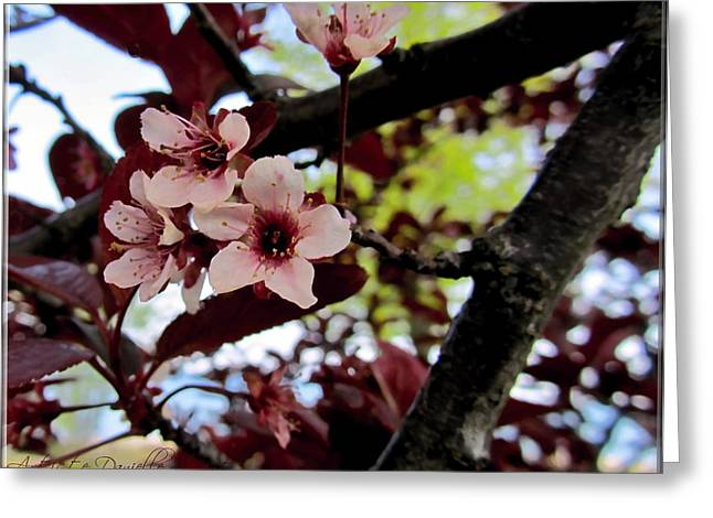 Cherry Blosoms Greeting Card by Danielle  Parent