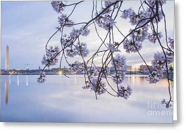 Live In Innocence Greeting Cards - Cherry Blossom Dawning Greeting Card by Terry Rowe