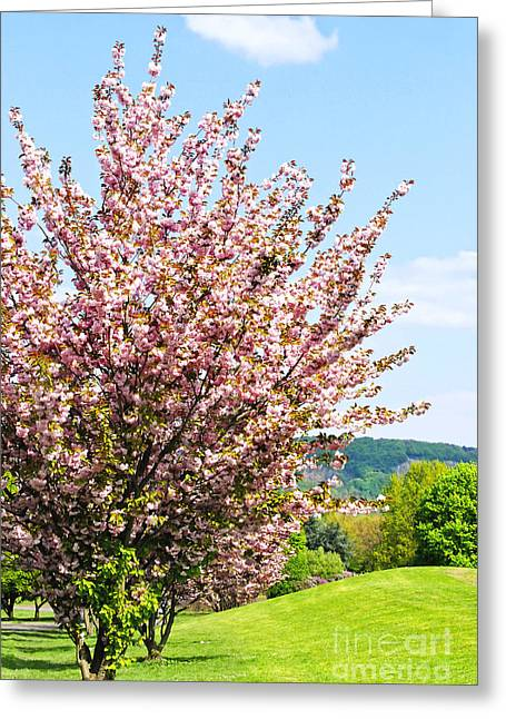 Europe Mixed Media Greeting Cards - Cherry Blossom Greeting Card by Design Windmill