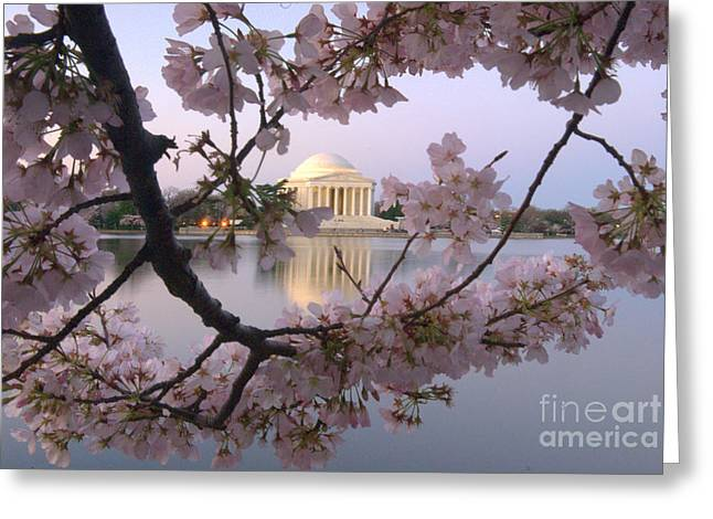 Jefferson Memorial Photographs Greeting Cards - Cherry Blossom Festival   DC Greeting Card by Willie Harper