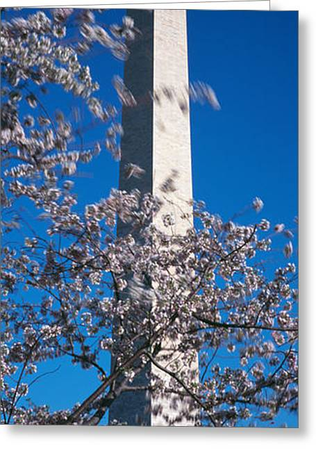 Flag Of Usa Greeting Cards - Cherry Blossom In Front Of An Obelisk Greeting Card by Panoramic Images