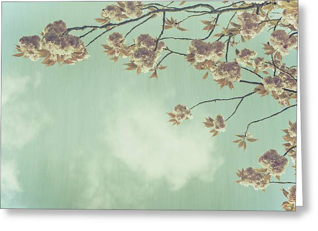 Flowered Greeting Cards - Cherry Blossom in Fulwood Park Greeting Card by Nomad Art And  Design