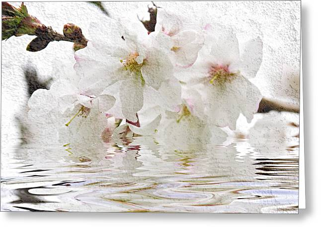 Blossom Greeting Cards - Cherry blossom in water Greeting Card by Elena Elisseeva