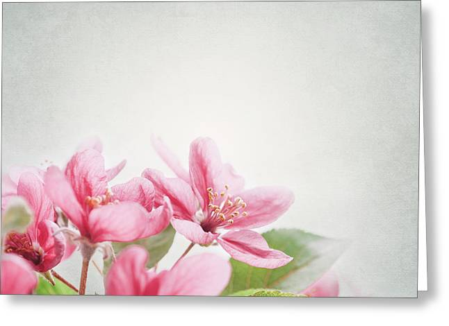 Pink Flower Prints Pyrography Greeting Cards - Cherry Blossom Greeting Card by Jelena Jovanovic