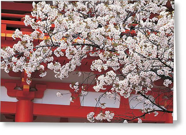 Cherry Blossom Kamigamo Shrine Kyoto Greeting Card by Panoramic Images