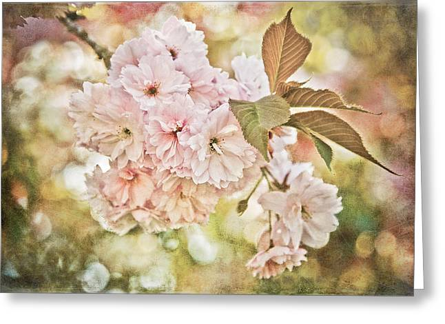 Loriental Greeting Cards - Cherry Blossom Greeting Card by Loriental Photography