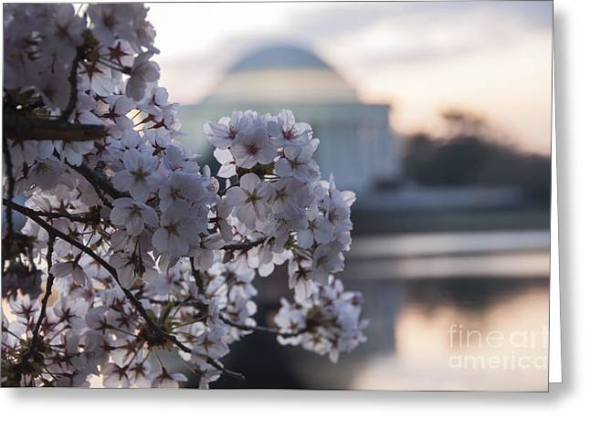 Diplomacy Greeting Cards - Cherry Blossom Memories Greeting Card by Terry Rowe