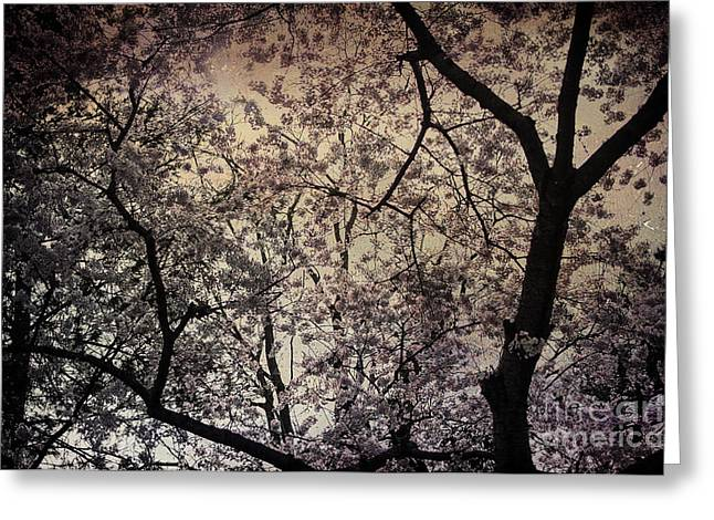 Terry Rowe Greeting Cards - Cherry Blossom Sky Greeting Card by Terry Rowe