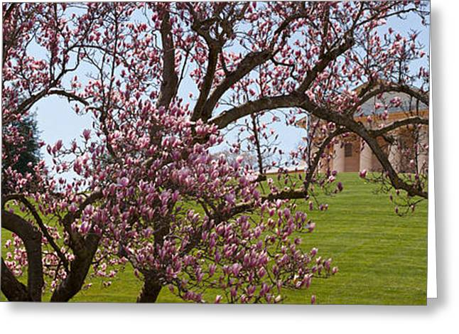 National Cemetery Greeting Cards - Cherry Blossom Trees At The Gravesite Greeting Card by Panoramic Images
