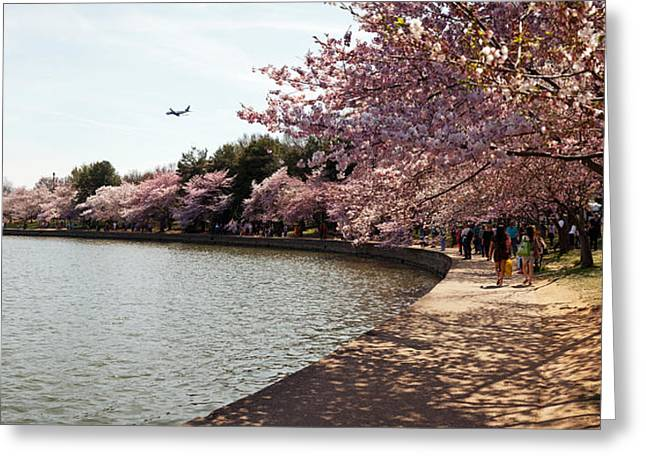 Tidal Basin Greeting Cards - Cherry Blossom Trees At Tidal Basin Greeting Card by Panoramic Images