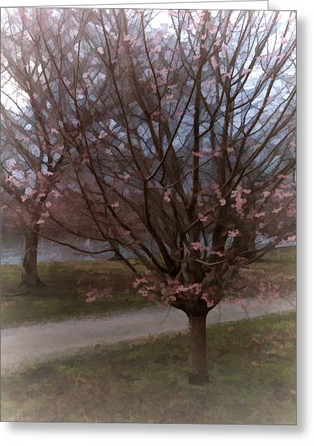 Fairmount Park Greeting Cards - Cherry Blossom Trees Greeting Card by Flo Karp