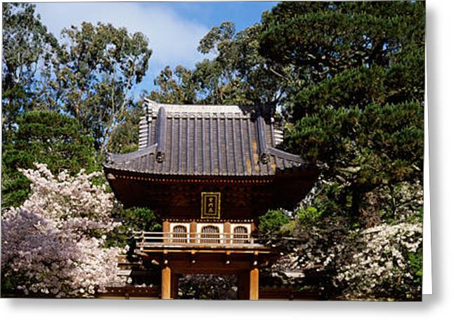 Golden Gate Park Greeting Cards - Cherry Blossom Trees In A Garden Greeting Card by Panoramic Images