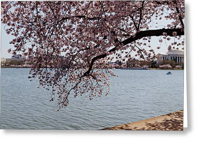 Jefferson Memorial Greeting Cards - Cherry Blossom Trees With The Jefferson Greeting Card by Panoramic Images