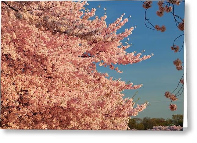 Metro Greeting Cards - Cherry Blossoms 2013 - 013 Greeting Card by Metro DC Photography