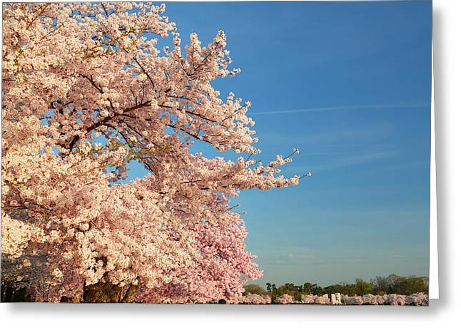 Photography Photographs Greeting Cards - Cherry Blossoms 2013 - 014 Greeting Card by Metro DC Photography