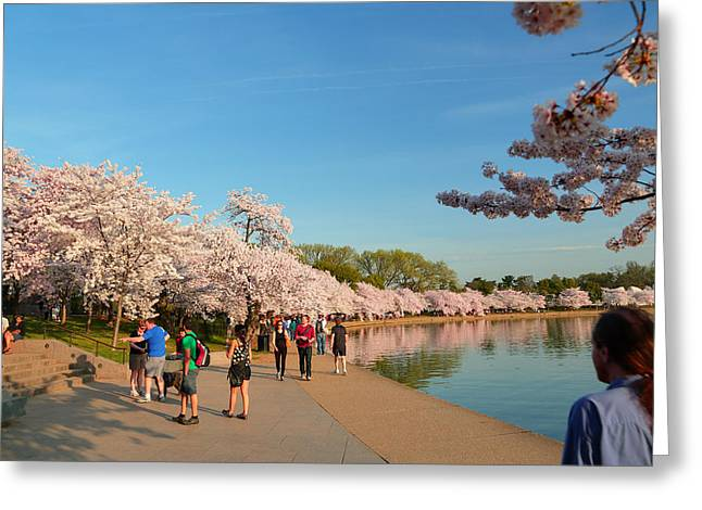 Washington Greeting Cards - Cherry Blossoms 2013 - 020 Greeting Card by Metro DC Photography