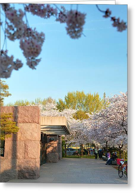 Cherry Blossoms 2013 - 021 Greeting Card by Metro DC Photography