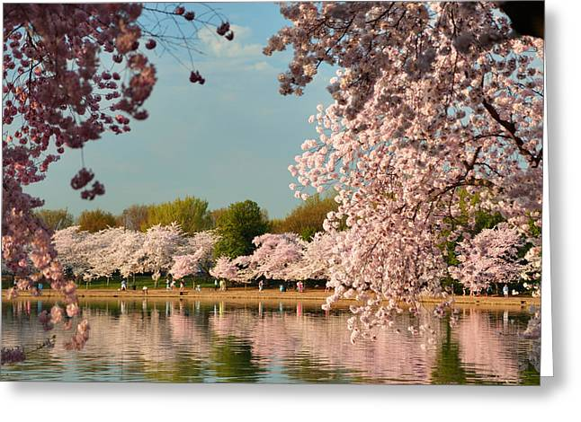 Tidal Basin Greeting Cards - Cherry Blossoms 2013 - 023 Greeting Card by Metro DC Photography