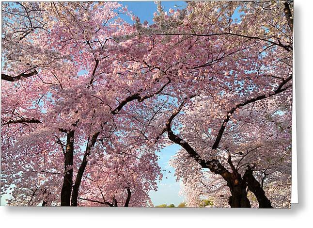Washington Monument Greeting Cards - Cherry Blossoms 2013 - 025 Greeting Card by Metro DC Photography