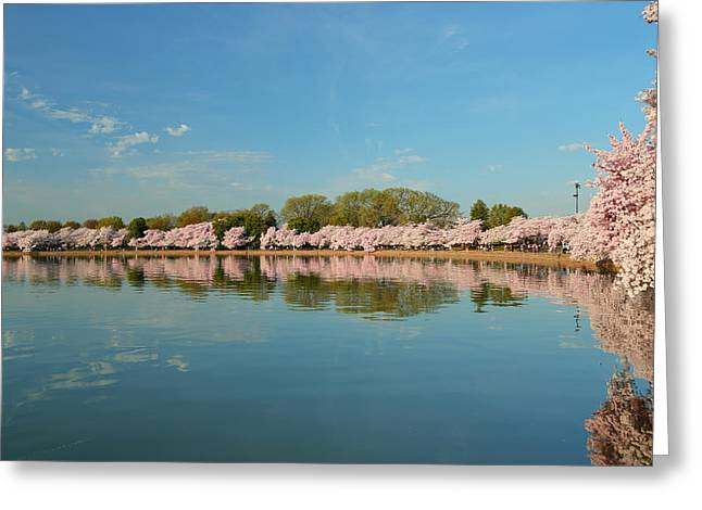 Tidal Basin Greeting Cards - Cherry Blossoms 2013 - 026 Greeting Card by Metro DC Photography