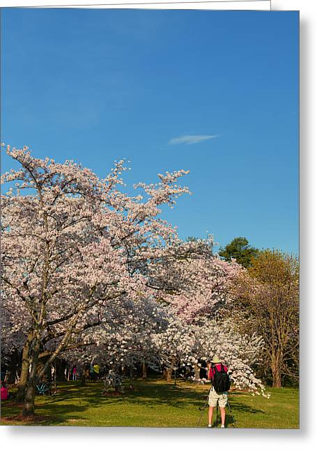 Cherry Blossoms 2013 - 029 Greeting Card by Metro DC Photography