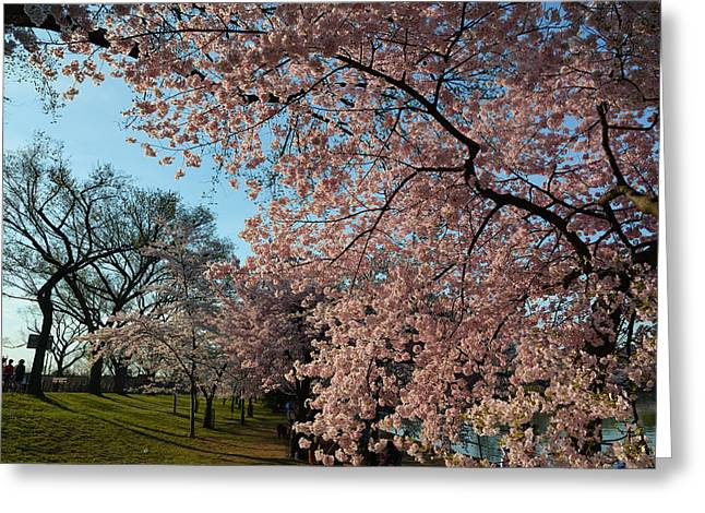 Trees Photographs Greeting Cards - Cherry Blossoms 2013 - 038 Greeting Card by Metro DC Photography