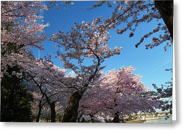 Cherry Blossoms 2013 - 042 Greeting Card by Metro DC Photography