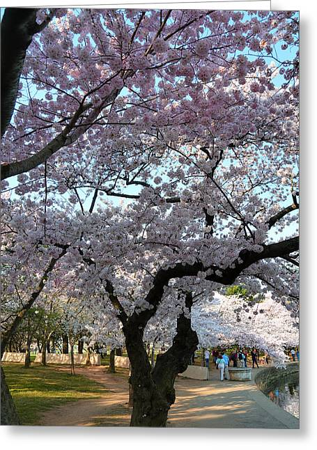 Washington Monument Greeting Cards - Cherry Blossoms 2013 - 044 Greeting Card by Metro DC Photography