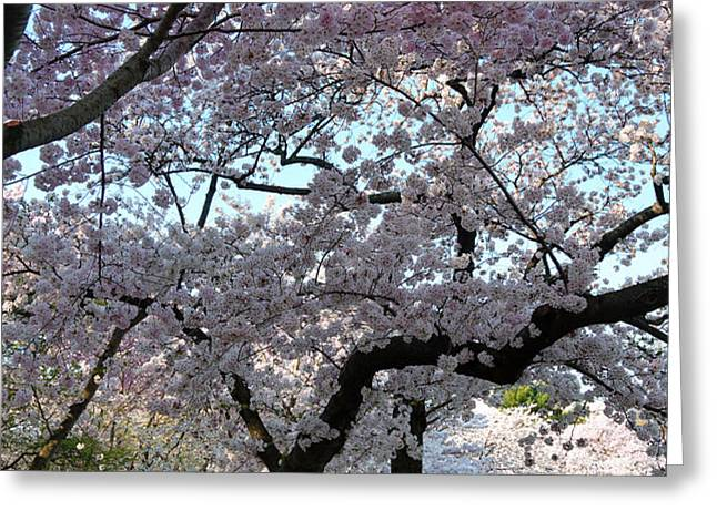 Cherry Blossoms 2013 - 044 Greeting Card by Metro DC Photography