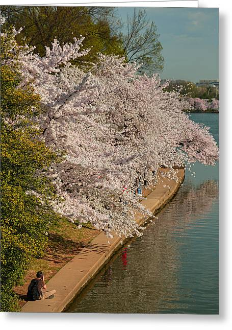 Cherry Greeting Cards - Cherry Blossoms 2013 - 053 Greeting Card by Metro DC Photography