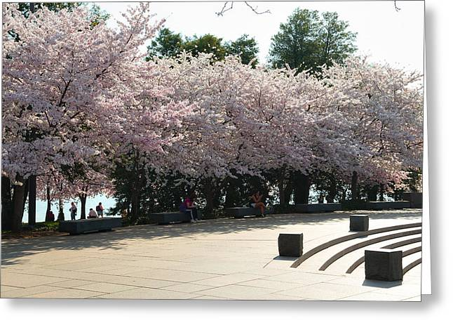 Washington Dc Greeting Cards - Cherry Blossoms 2013 - 059 Greeting Card by Metro DC Photography