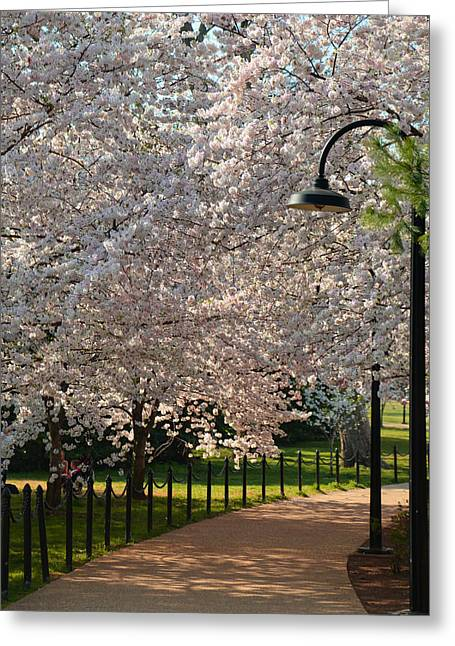 Cherry Blossoms 2013 - 060 Greeting Card by Metro DC Photography