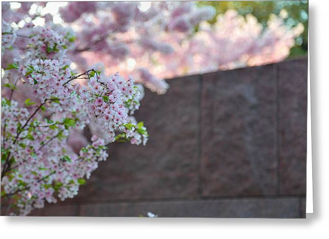 Cherry Blossoms 2013 - 066 Greeting Card by Metro DC Photography