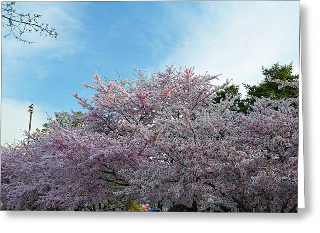 Memorial Greeting Cards - Cherry Blossoms 2013 - 070 Greeting Card by Metro DC Photography