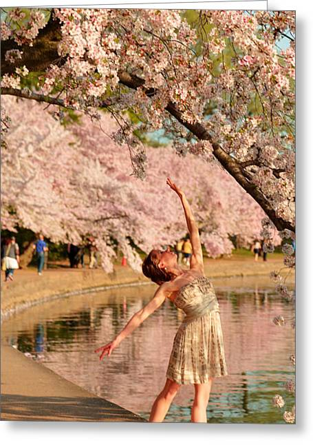 Pink Greeting Cards - Cherry Blossoms 2013 - 077 Greeting Card by Metro DC Photography