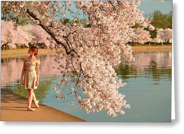 White Photographs Greeting Cards - Cherry Blossoms 2013 - 078 Greeting Card by Metro DC Photography